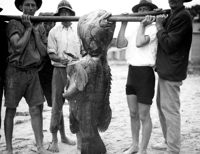 Photo: Beach 3 Group of fisherman struggling to hold a very large groper, circa 1930s. George Jackman, photographer. LS-LSP-CD358-IMG0007
