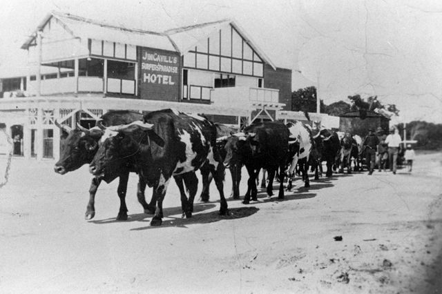 Photo: Work 1 Surfers Paradise Surf Life Saving Club leading the march past at a surf carnival in 1947, Queensland [picture]/ Photographer unknown. Asset name LS-LSP-CD131-IMG0021