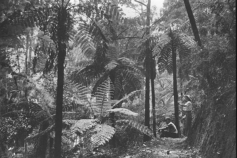 Photo: Forest 8 Admiring tree ferns on the Twin Falls track, Springbrook, Queensland, circa 1938 [picture] / Photographer unknown. Asset name LS-LSP-CD025-IMG0034