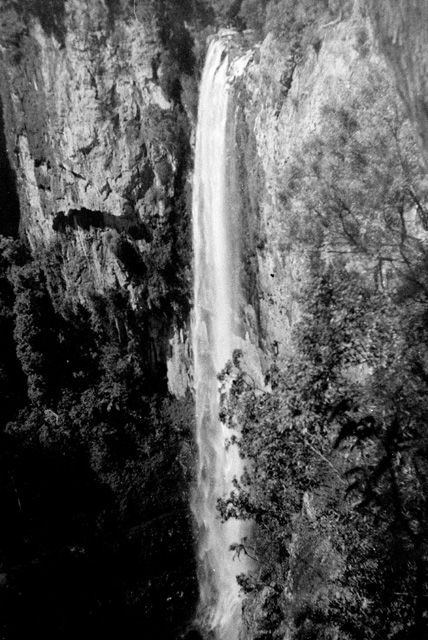 Photo: Forest 6 Purlingbrook Falls, Springbrook, circa 1940s [picture] / Graham Hardy, photographer. Asset name LS-LSP-CD291-IMG0006