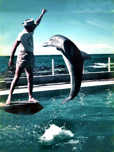Photo: Animals 5 Dolphin show at Jack Evans Porpoise Pool, Snapper Rocks, Coolangatta, Queensland, 1959 [picture] / Ray Sharpe, photographer. Asset name LS-LSP-CD522-IMG0001