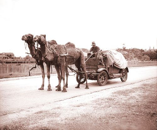 Photo: Work 3 Camels pulling a trailer manufactured from a vehicle chassis, High Street, Southport, circa 1930s. George Jackman, photographer. LS-LSP-CD288-IMG0008
