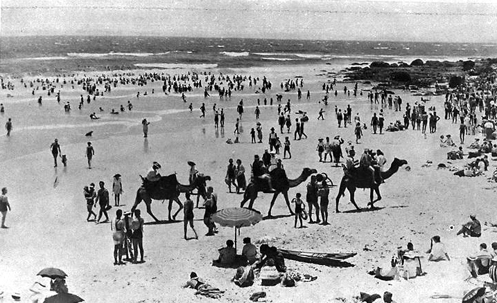 Photo: Animals 1 Camel rides on Kirra Beach, Queensland, circa 1939 [picture] / Photographer unknown. Asset name LS-LSP-CD054-IMG0104